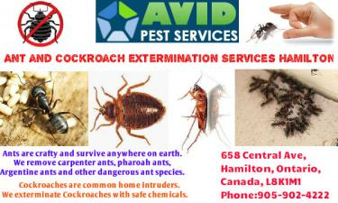 Ant and cockroach Extermination Services Hamilton, hamilton